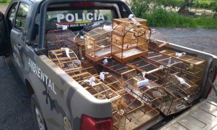 PM resgata aves silvestres que eram criadas em gaiolas no Distrito Federal