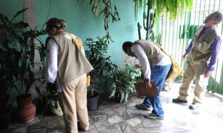 Chuvas deixam o Distrito Federal em alerta contra o mosquito da dengue