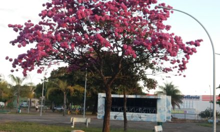 Projeto Arte na Praça encerra 2ª fase,mas deixa flores na Praça das Artes