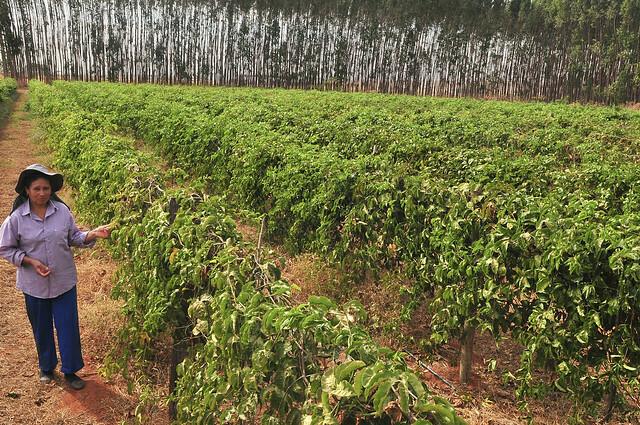 Cartão garante benefícios a produtores rurais do Distrito Federal