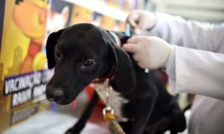 Setembro é mês de vacinar os pets