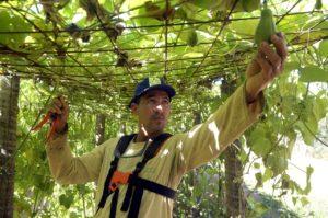 Governo vai comprar até R$ 1,5 milhão de agricultores familiares