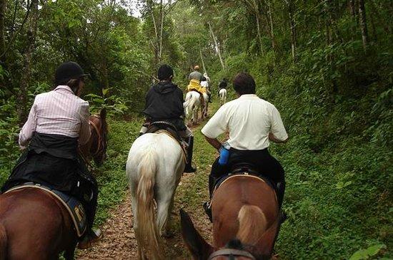 Rota do Cavalo ganha cara nova com trilha equestre