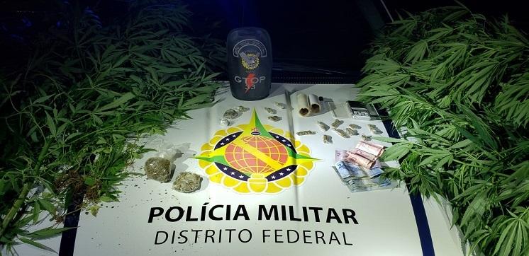 Policiais militares prendem homem com plantação de maconha em Sobradinho