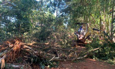 PMDF flagra desmatamento irregular em Sobradinho