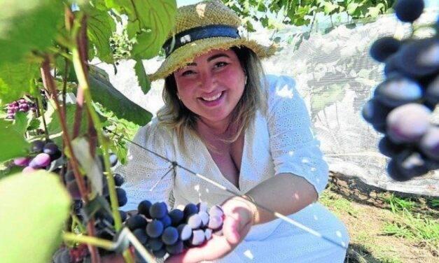 DF tem 34 propriedades voltadas para a produção de uvas
