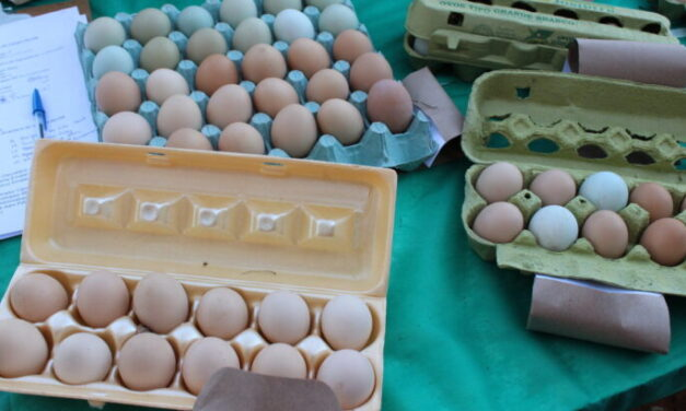 Curso sobre implantação de agroindústria de pequeno porte de ovos
